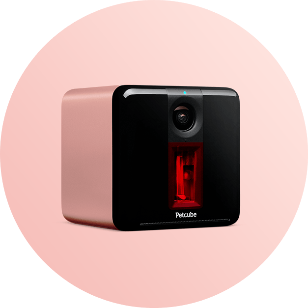 Petcube Play interactive pet camera with laser pointer in Rose Gold color