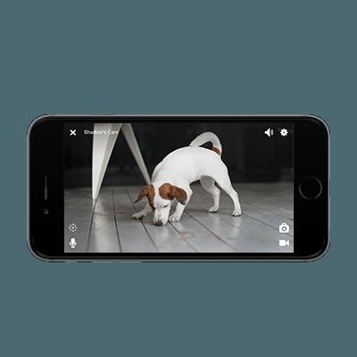 Petcube App