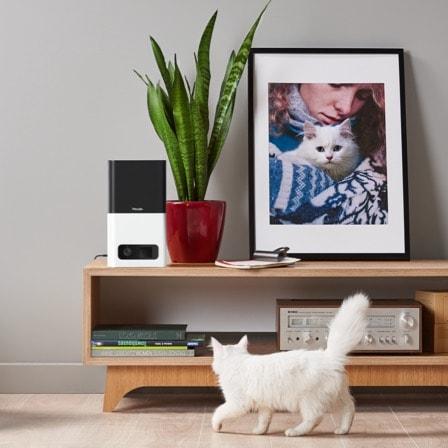 Bites Snow-White Cat.jpg