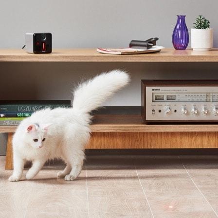 Play Matte-Silver Cat.jpg